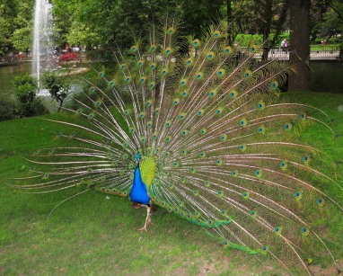 © 2010 M.T. Bravo Asturias. Oviedo. Parque San Francisco
