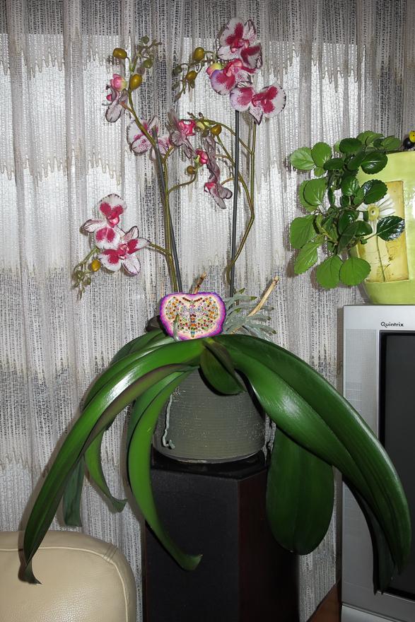 Orquídea, Mariposa